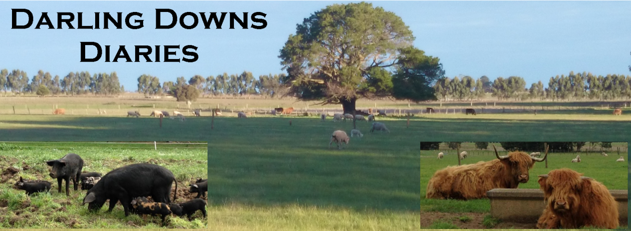 Darling Downs Diaries