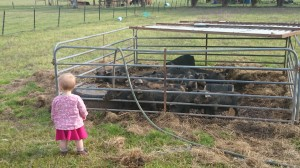 Adiah and the weaned piglets. That's about as close as she is going to get.